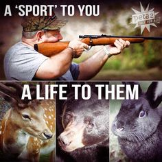 It boggles my mind how people can call murder a fun sport ): And then to be proud of their kills...... even more disgusting!