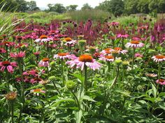 Sussex Prairie Garden | GardenVisit.com, the garden landscape guide