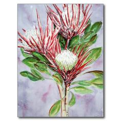 Proteas Postcards from my original watercolour painting. #proteas #flowers #art #red