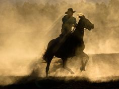 """A cowboy and his horse kick up dust under the late afternoon sun at the Baryulgil Campdraft in New South Wales, Australia. Campdrafting is an Australian sport, similar to American stock horse events, in which a rider attempts to separate a cow from its herd in the """"camp,"""" or yard. To prove they have it under control, they must lead the cow through a series of pegs outside the yard in under 40 seconds. Photograph by Katrina Wade, July 11, 2014"""