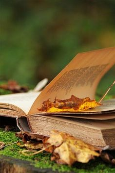 Reading a book / crisp leaves of fall ~ perfect peace / a few of my favorite things. I Love Books, Good Books, My Books, Fall Books, Reading Books, Reading Time, Somerset Maugham, Autumn Leaves, Autumn Fall