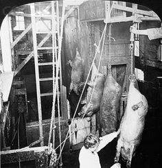 Chicago- Meat Packing Industry - Swift & Co.'s Packing House, 51784- killing hogs, shackling pen and wheel- c1906, H74825, by by H.C. White Co
