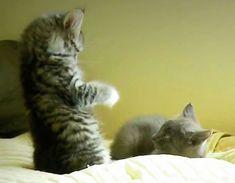 kittens wrestling