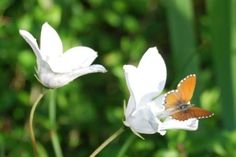 Just so Beautiful! Butterfly and Flower Daydream, Butterfly, African, Dreams, Animal, Nature, Flowers, Plants, Life
