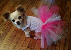Furever Fabulous - like us on facebook Follow us on Instagram @fureverfabulous Dog clothes, accessories and more! Tutu dress, upcycled newborn onesie!