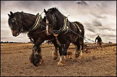 Horse Power Equines and human beings hold a historic collaboration. Asian wanderers no doubt domesticated the first horses some 4000…