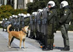 Cão de luta :) A stray dog barks at riot police during a high school students' anti-austerity protest in Athens, on February (AP Photo/Thanassis Stavrakis)