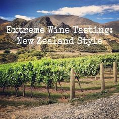 Extreme Wine Tasting, New Zealand Style. An overview of wine tasting on New Zealand's South Island - Central Otago, Marlborough, and Nelson. Includes recommended wineries and wines. Nz South Island, New Zealand South Island, New Zealand Wine, New Zealand Travel, Places To Travel, Places To See, New Zealand Adventure, Central Otago, Roadtrip