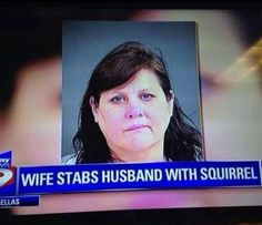 the weapon... - (stabbing)(husband)(squirrel)(news report)