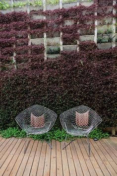 Enviable living wall Cris Rosenbaum & Marcelo Rosenbaum « the selby