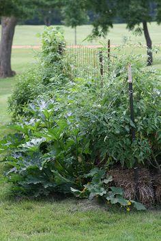 Organic Straw Bale Gardening * Visit the image link for more details. Vegetable Garden For Beginners, Gardening For Beginners, Straw Bale Gardening, Straw Bales, Organic Gardening Tips, Landscape Plans, Horticulture, Compost, Landscape Photography