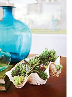 Plant succulents in an oversized shell - great centerpiece for outdoor dining table