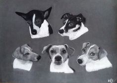 Jack russel Pastel portretten in opdracht getekend. Jack Russells, Dogs, Animals, Animales, Animaux, Doggies, Animal, Animais, Dieren