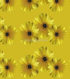 pretty yellow daisy flowers photo art.