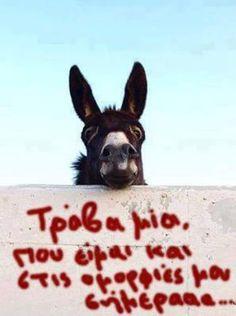 Ανθή Νικολάου! - Google+ Funny As Hell, The Funny, Happy Animals, Funny Animals, Life In Greek, Funny Greek Quotes, Funny Times, Photo Quotes, True Words