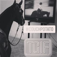 You know it's a typical #polo weekend when even your #horse is an #equestrian #couchpotato! #equestriansports #tvjunkie #worldseriesofpolo #polofans #hunterjumper #horsesports  #iampolo #greenliving #farmlife