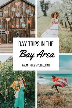 Within a couple of hours of the main Bay Area cities there are quite a few options! We're sharing 11 Bay Area Day Trip ideas to check out. Bay Area Cities, Northern California Travel, Tourism Website, Day Trips, Palm Trees, Wanderlust, Couple, Check, Ideas