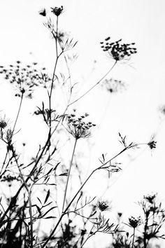 bw #plants #white #black #nature Black and white background Black and white aesthetic White plants