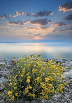 Sunrise  losinj island, Croatian