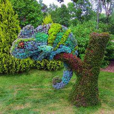 Flower Chameleon.