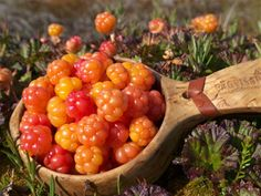 Cloudberries Hjortron in swedish. Best berries ever and it´s called the yellow gold in Sweden. Fruit And Veg, Fruits And Vegetables, Weird Food, Exotic Fruit, Vegan Dishes, Food Photography, Berries, Good Food, Food Porn