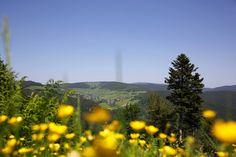 Todtnauberg im Schwarzwald. Natur und Erholung pur am Fuße des Feldberg.