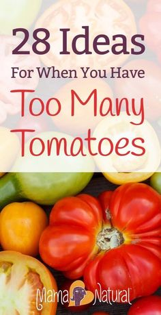 Late in the summer, many gardeners end up with too many tomatoes! Here are 28 ways to use all those extra tomatoes from your garden. https://www.mamanatural.com/too-many-tomatoes/