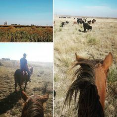 Day #13. Thankful for the beautiful day we had to move cows. I got to help move them today over to our new land. I really did enjoy finally being able to work with my fiance by my side and I am very blessed for the way our cattle operation to growing. #Blessed #LivingTheDream #Thankful #JK_CattleCo #Rancher #FutureMrsGoss #BeautifulDay