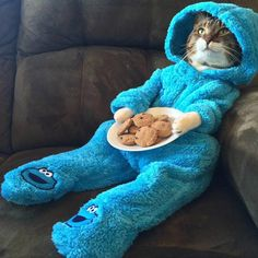 Everybody loves the cookie monster but a cat dressed as the cookie monster, you can't get any better!