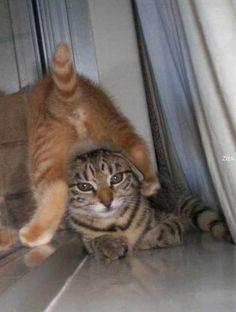gatos-posturas-20
