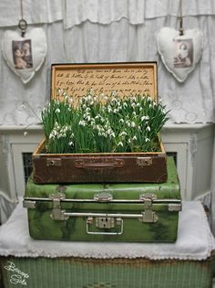Snowdrops in a suitcase......(love that they wrote caligraphy quote script on the inside)