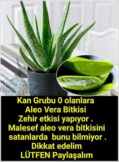 Bilgi Aloa Vera, Motivation Wall, Bamboo Plants, New Inventions, Medicinal Plants, Aloe, Cool Words, Did You Know, Natural Remedies