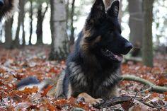 Jardan van Chika's Erf Van, Dogs, Animals, Animales, Animaux, Pet Dogs, Doggies, Animal, Animais