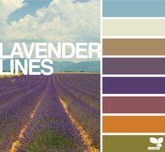 lavender lines