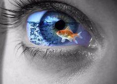 fish in eye
