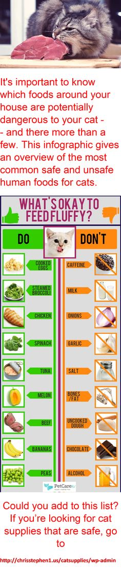 Please pay attention to what you should or should not feed your cat - it could save their life!