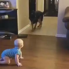 Amusing Animal Memes Of The Day – 52 Pics – Attractive Animals Environment On Funny Babies, Funny Dogs, Cute Dogs, Cute Babies, Funny Memes, Pet Memes, Dog Sleeping Positions, Sleeping Dogs, Cute Animal Videos