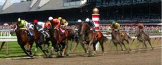 Assured your win in #HorseRacingBets by following best #OnlineHorseBetting websites. These websites provide specific guides that help the new as well as professional bettors in placing successful bets.