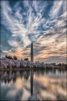 Sunrise and Cherry Blossoms Washington, DC