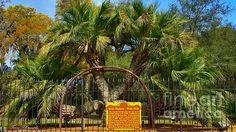 H And M Panama City Beach wN..P-C¡t¥ on Pinterest | Panama city florida, Panama ...