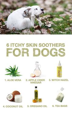 Itchy Skin Soothers for Dogs Does your pup struggle with itchy skin? Here are 6 natural skin soothers from The Honest Kitchen!Does your pup struggle with itchy skin? Here are 6 natural skin soothers from The Honest Kitchen! Dog Care Tips, Pet Care, Pet Tips, Puppy Care, Australian Shepherd Red Tri, Diy Pet, Dog Health Tips, Pet Health, Hair Health