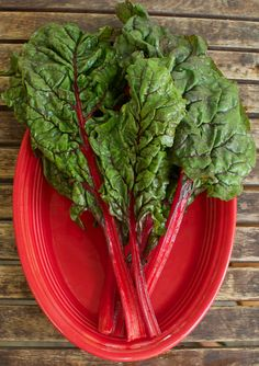 new photos of the red swiss chard. We're eating this tomorrow.  Maybe on a pizza.