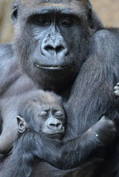 Amor maternofilial