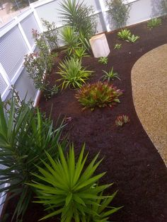 www.cpricelandscapes.com Stepping Stones, Landscape, Outdoor Decor, Plants, Ideas, Home Decor, Stair Risers, Decoration Home, Room Decor