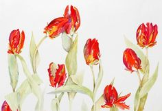 abstract red tulip art - Google Search