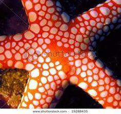 Red Sea Fish   ;)