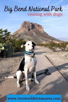 Here are things to do when visiting Big Bend National Park with dogs. Places to stop or see, from the desert to the mountains to the river areas. #traveltexas #bigbendnp #usatravel
