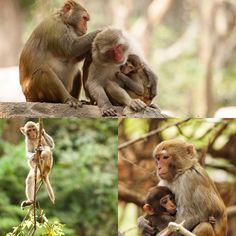 🐵 Monkey business 🐒 @visit_sanya #visitsanya #monkeybusiness #sanya #china #sanyaphotocollage #sanyaheartstohearts