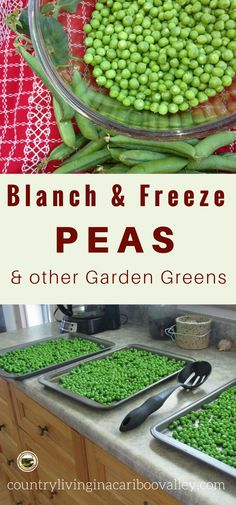 Freeze Peas, Beans, Carrots and other vegetables by blanching. Easy to do, takes 10 minutes. Freezer meals easy.