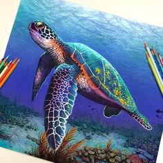 Sea Turtle Painting, Sea Turtle Art, Pencil Drawings Of Animals, Realistic Pencil Drawings, Color Pencil Art, Colorful Drawings, Colorful Animal Paintings, Pencil Illustration, Pencil Sketching